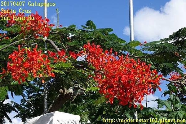 1060407 Santa CruzDSC07245 (640x427).jpg