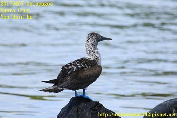 1060407 Santa Cruz894A2757 (640x427).jpg