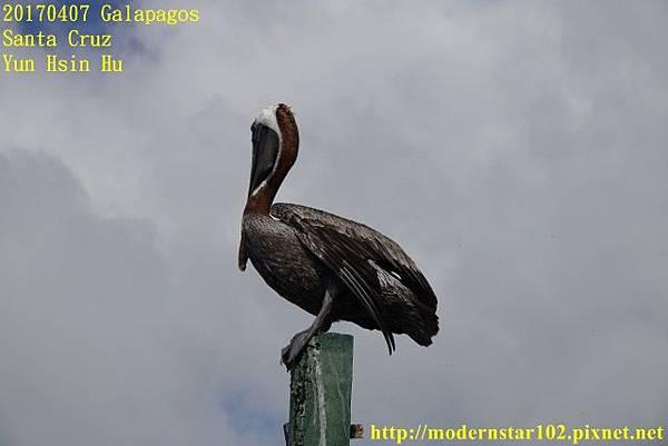 1060407 Santa CruzDSC07287 (640x427).jpg