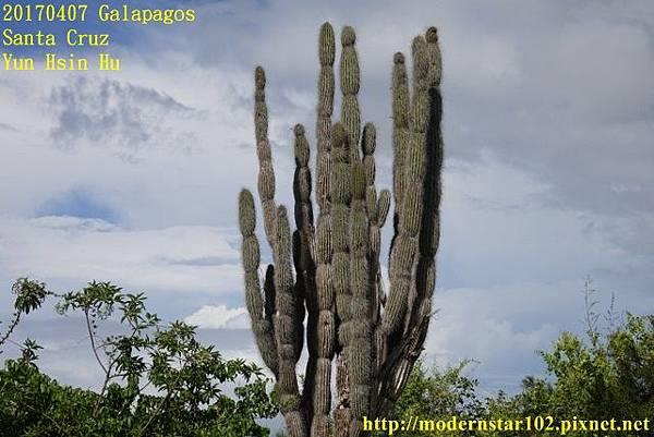 1060407 Santa CruzDSC07307 (640x427).jpg
