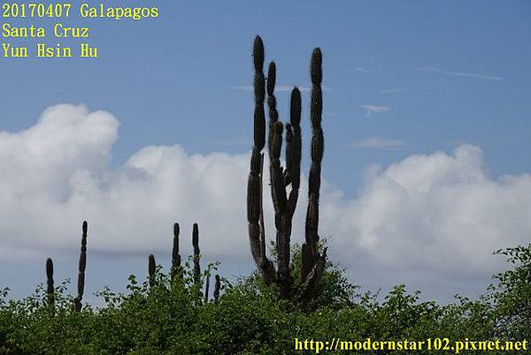 1060407 Santa CruzDSC07312 (640x427).jpg