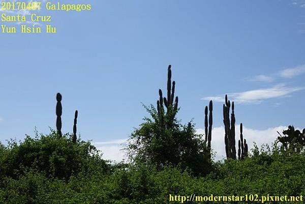 1060407 Santa CruzDSC07314 (640x427).jpg