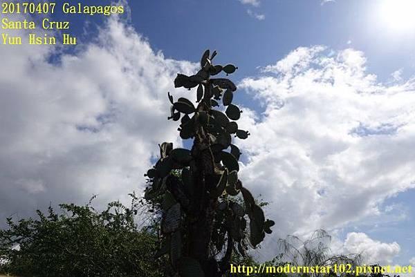 1060407 Santa CruzDSC07315 (640x427).jpg