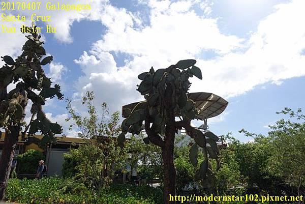 1060407 Santa CruzDSC07322 (640x427).jpg
