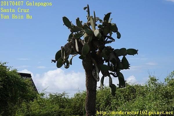 1060407 Santa CruzDSC07309 (640x427).jpg