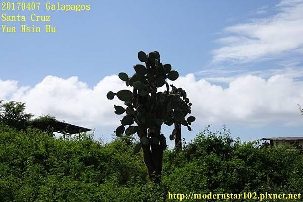 1060407 Santa CruzDSC07355 (640x427).jpg