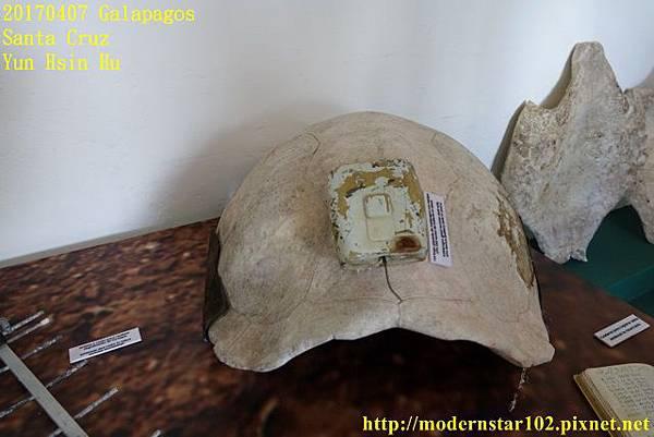 1060407 Santa CruzDSC07380 (640x427).jpg