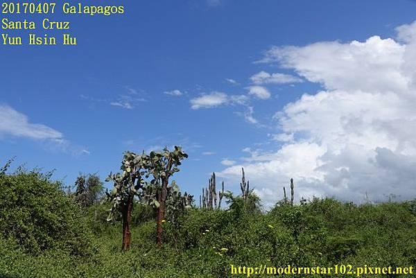 1060407 Santa CruzDSC07571 (640x427).jpg