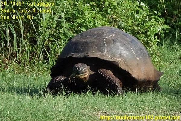 1060407 Santa Cruz islandDSC08210 (640x426).jpg