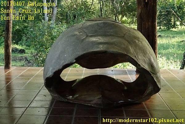 1060407 Santa Cruz islandDSC08354 (640x427).jpg
