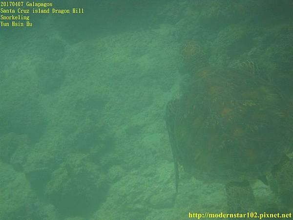 1060408 SnorkelingIMG_0356 (640x480).jpg