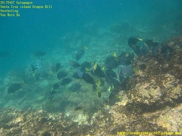 1060408 SnorkelingIMG_0308 (640x480).jpg