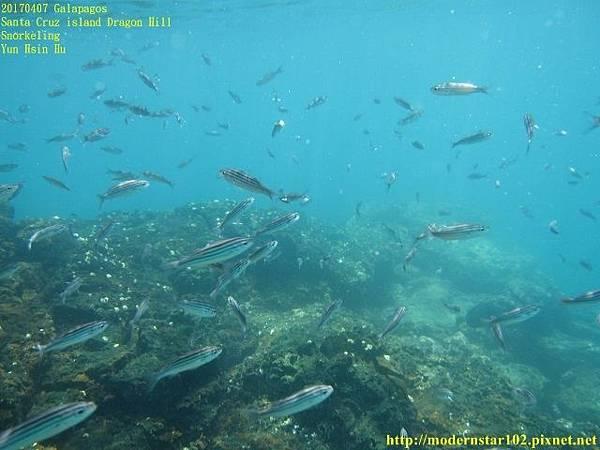 1060408 SnorkelingIMG_0285 (640x480).jpg
