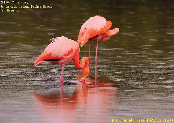 1060408 Bachas Beach894A3751 (640x452).jpg