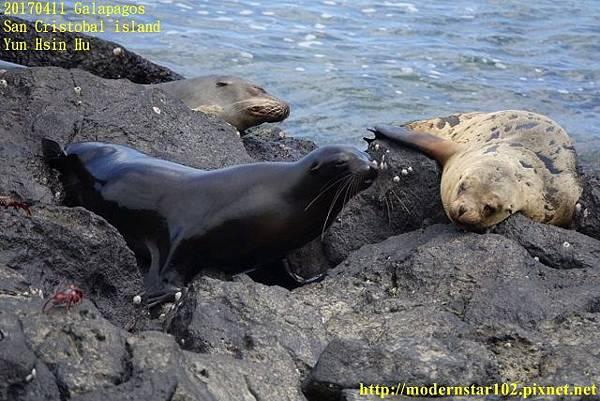 1060411 San Cristobal islandDSC01707 (640x427).jpg
