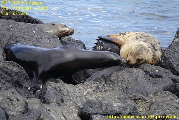 1060411 San Cristobal islandDSC01706 (640x427).jpg
