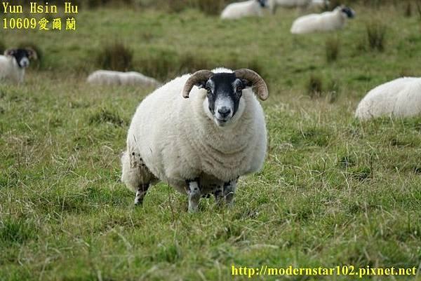 1060930愛爾蘭4DSC09578 (640x427).jpg