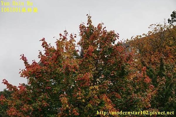 1061001蘇格蘭DSC09884 (640x427).jpg