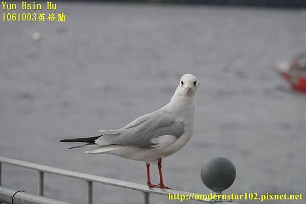 1061003英格蘭DSC01506 (640x427).jpg