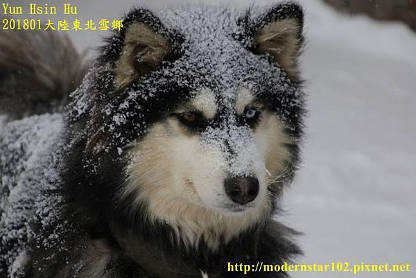 20170103-11雪鄉894A8556 (640x427).jpg