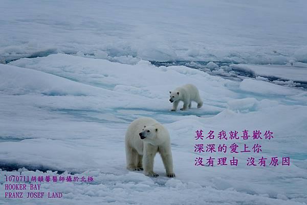 1070711 ice bearDSC02827.JPG