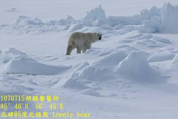 1070715 85 degree polar bear894A1171 (640x427).jpg