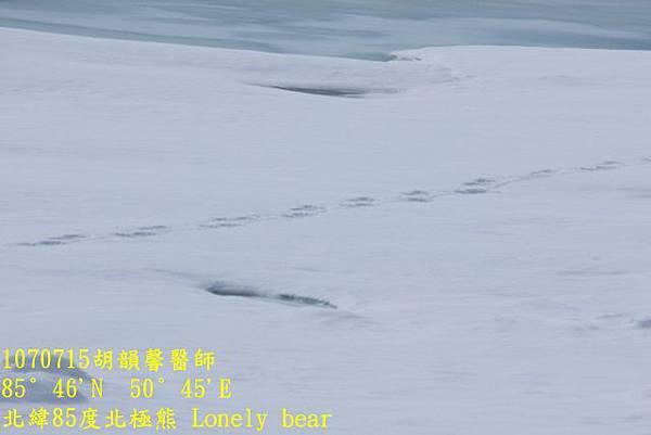 1070715 85 degree polar bear894A1149 (640x427).jpg