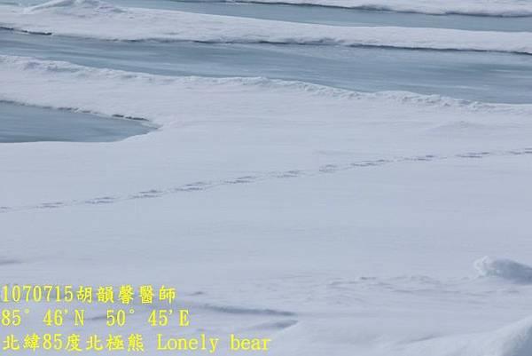 1070715 85 degree polar bear894A1150 (640x427).jpg