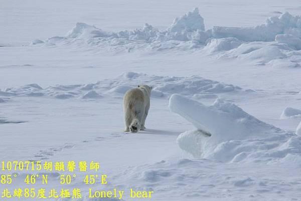 1070715 85 degree polar bear894A1167 (640x427).jpg