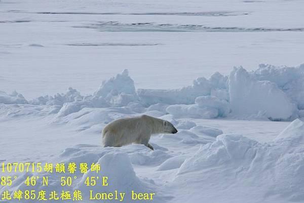 1070715 85 degree polar bear894A1175 (640x427).jpg