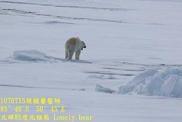 1070715 85 degree polar bear894A1196 (640x427).jpg