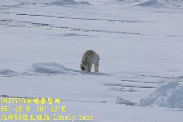 1070715 85 degree polar bear894A1193 (640x427).jpg