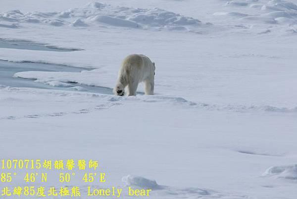 1070715 85 degree polar bear894A1142 (640x427).jpg