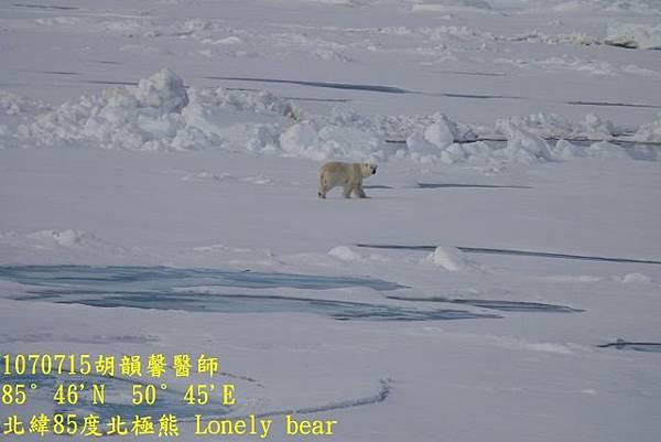 1070715 85 degree polar bearDSC06397 (640x427).jpg