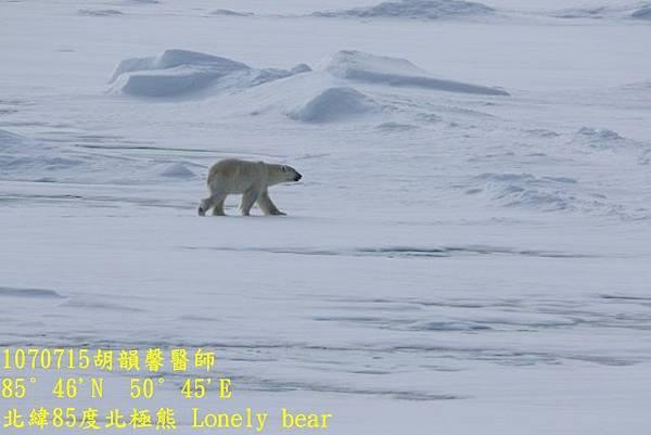 1070715 85 degree polar bear894A1224 (640x427).jpg