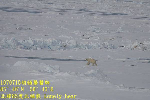 1070715 85 degree polar bearDSC06468 (640x427).jpg
