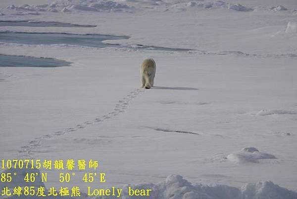 1070715 85 degree polar bearDSC06420 (640x427).jpg