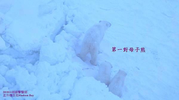 201811Bear1071112 bear family13-2.jpg