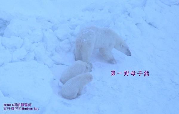 201811Bear1071112 bear family12-2.jpg