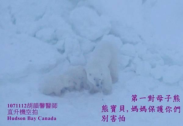1071112bear family1071112 bear family17.jpg