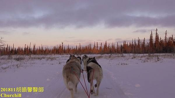 201811Churchill1071112 dog (640x360).jpg