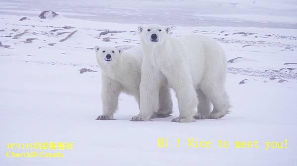 1071115 bear family1071115 bear family 3-1.jpg