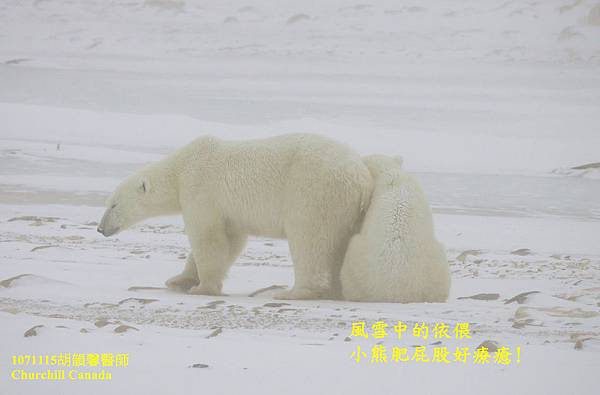 1071115 bear family1071117 bear family 4-1.jpg
