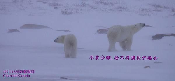 1071115 bear family1071115 fb bear family9.jpg