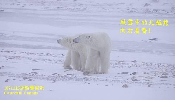 1071115 bear family10711115 bear family 2-1.jpg