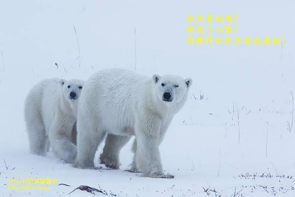 1071115 bear family894A7375-1.jpg