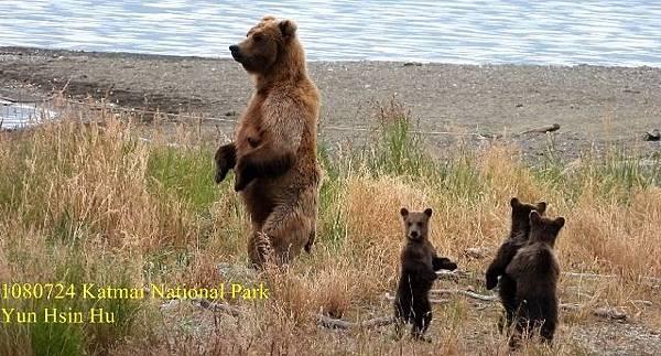 108 Bear1Mother%26;cub 1 - 複製 (640x344) (2).jpg