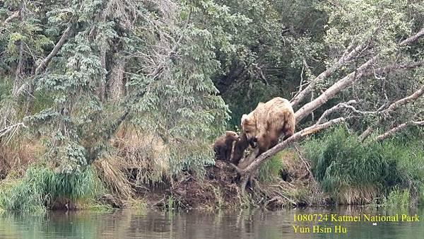 108 Bear108 bear 4 (640x360).jpg