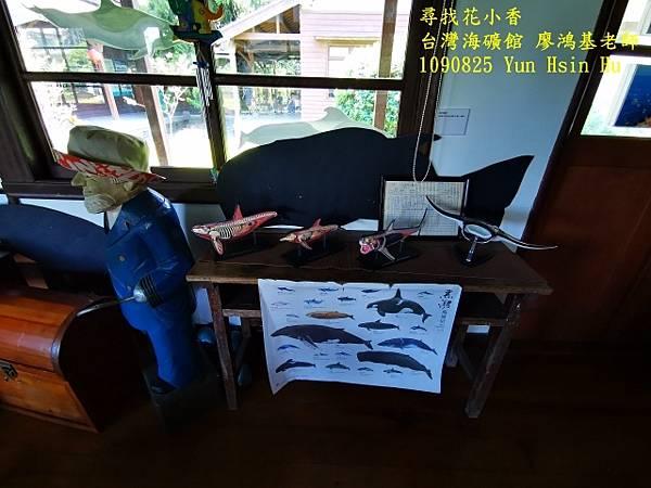 1090825多羅滿賞鯨IMG_20200825_122105 (640x480).jpg