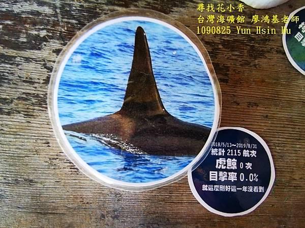 1090825多羅滿賞鯨IMG_20200825_122428 (640x480).jpg